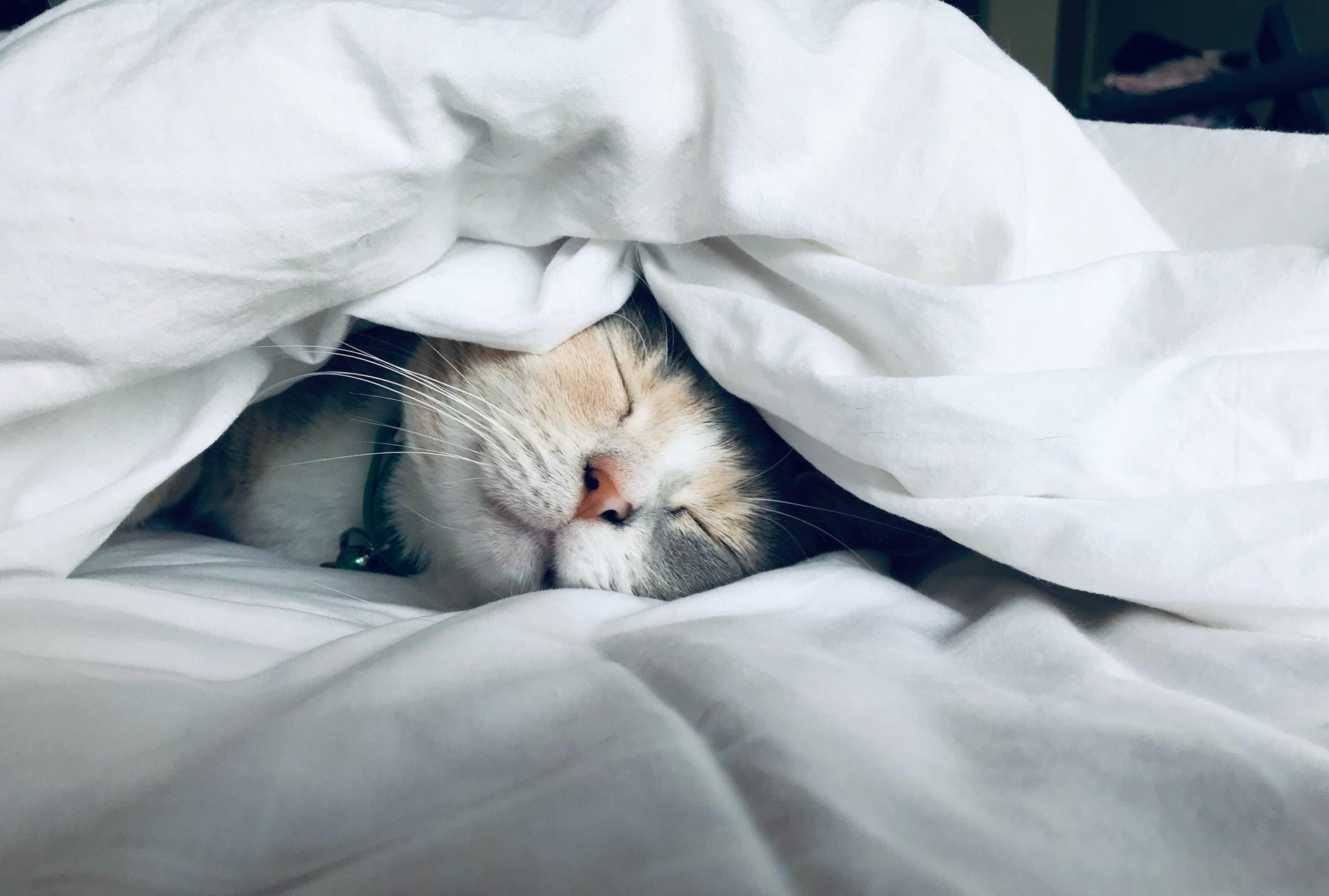 寝かしつけ 方法 コツ 群馬
